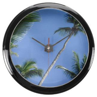 Aqua clock palm dream