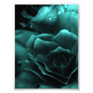 Aqua Close Up of a Double Begonia Photographic Print