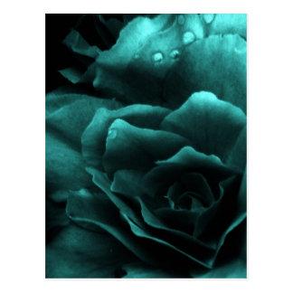 Aqua Close Up of a Double Begonia Postcard