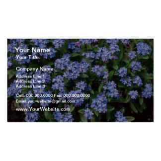 Aqua Forget-Me-Not, (Myosotis Alpestris) flowers Business Card Templates