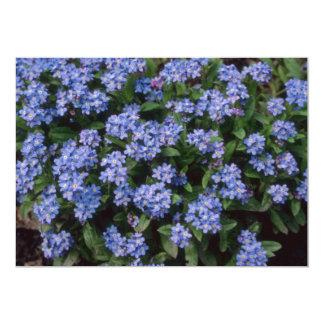 Aqua Forget-Me-Not, (Myosotis Alpestris) flowers Invite