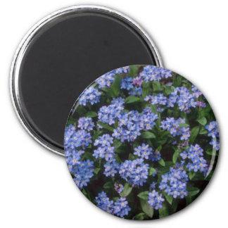 Aqua Forget-Me-Not, (Myosotis Alpestris) flowers Refrigerator Magnet