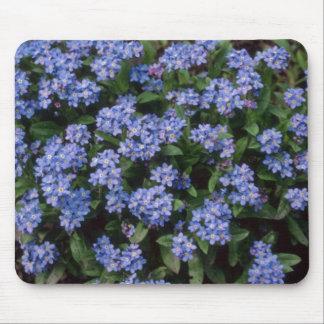Aqua Forget-Me-Not, (Myosotis Alpestris) flowers Mouse Pads