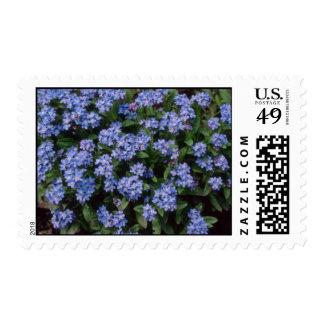Aqua Forget-Me-Not, (Myosotis Alpestris) flowers Postage Stamp