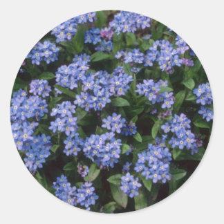 Aqua Forget-Me-Not, (Myosotis Alpestris) flowers Sticker