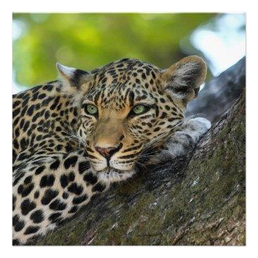 Art Themed Aqua_Leopard_20180101_by_JAMColors Photo Print