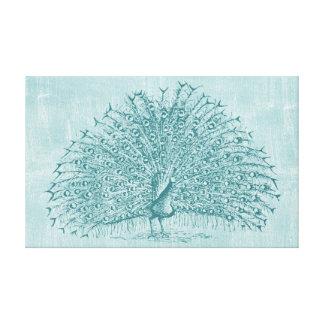 Aqua Peacock Stretched Canvas Print