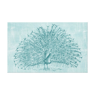 Aqua Peacock Canvas Print