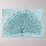 Aqua Peacock Print