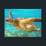 """Aqua Sea Turtle Canvas Print<br><div class=""""desc"""">Swimming freely in the warm waters of Hawaii,  this Green Sea Turtle will be a nice addition to any home decor.</div>"""