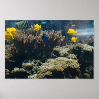Aquarium - 2 - print