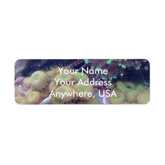 Aquarium Address Labels