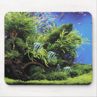 Aquarium and No.01 where the angel fish of the Mouse Pad