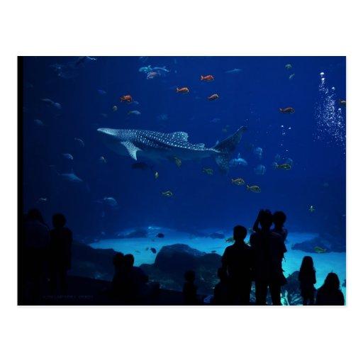 Aquarium Atlanta Georgia Postcard Zazzle