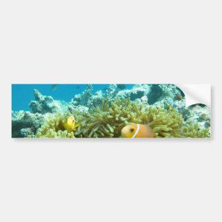 Aquarium Fish Bumper Sticker