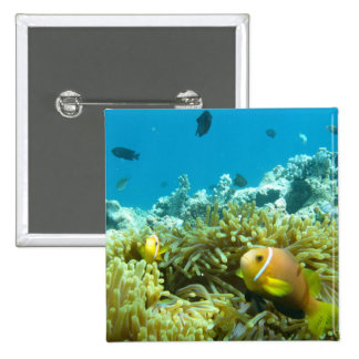 Aquarium Fish Pins