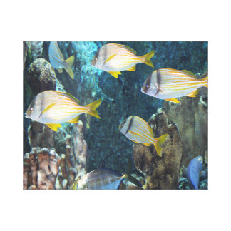 Aquarium Fish Canvas Art