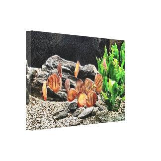Aquarium Fish Colony Canvas Art Print