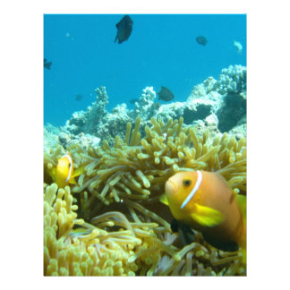 Aquarium Fish Flyer