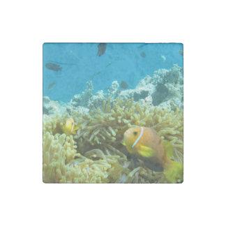 Aquarium Fish Stone Magnet
