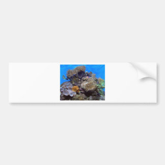 Aquarium Fish Photo Bumper Sticker