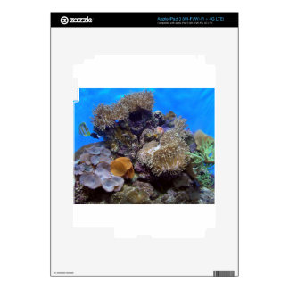 Aquarium Fish Photo iPad 3 Skins