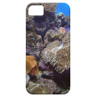 Aquarium Fish Photo iPhone 5 Cases