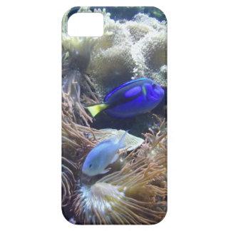 Aquarium Fish Photo iPhone 5 Covers