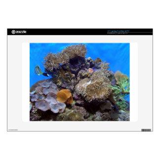 Aquarium Fish Photo Laptop Decals