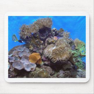 Aquarium Fish Photo Mousepad