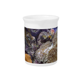 Aquarium Fish Photo Beverage Pitchers