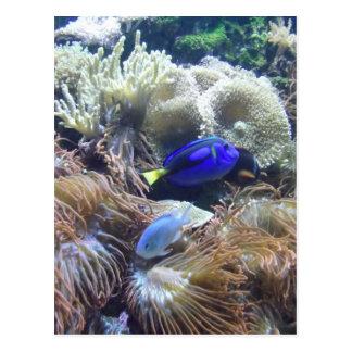 Aquarium Fish Photo Postcard