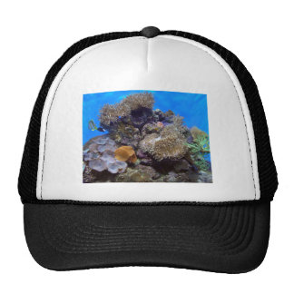 Aquarium Fish Photo Trucker Hat