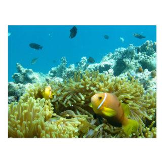 Aquarium Fish Postcard