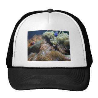 Aquarium Fish Trucker Hat