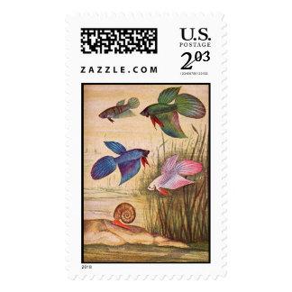 aquarium fish-Various Colored Bettas stamp postage