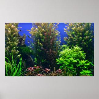 Aquarium for Aquarium Background Poster