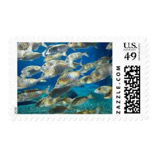 Aquarium In Ushaka Marine World, Durban Postage Stamp