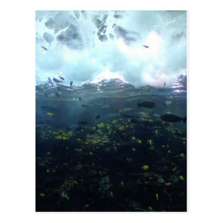 aquarium life postcard