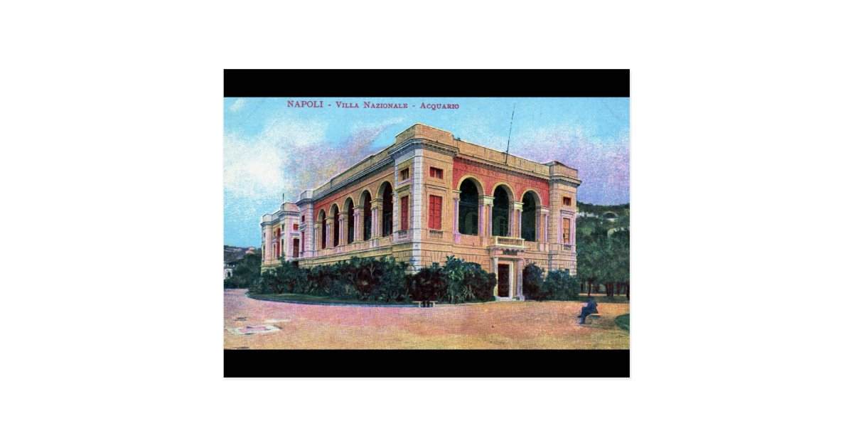 Aquarium Napoli Naples Italy 1915 Vintage Postcard Zazzle