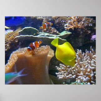 Aquarium (Nemo) Poster