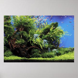 Aquarium of Freshwater Angelfish Poster