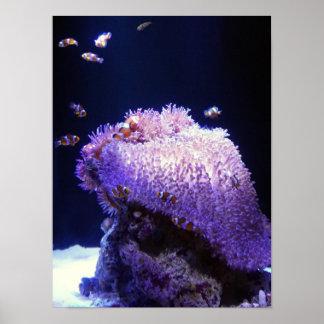 Aquarium Photo Poster