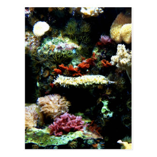 Aquarium Plant Art Post Card