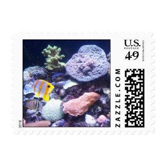 Aquarium Postcard Postage