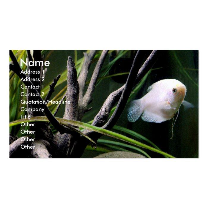 Aquarium Profile Cards