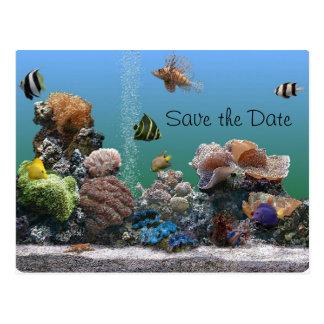 aquarium Save the Date Postcard