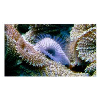 Aquarium shop business cards
