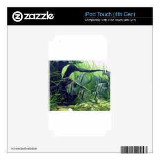 Aquarium Striped Fish iPod Touch 4G Skin