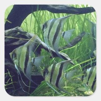 Aquarium Striped Fish Square Stickers